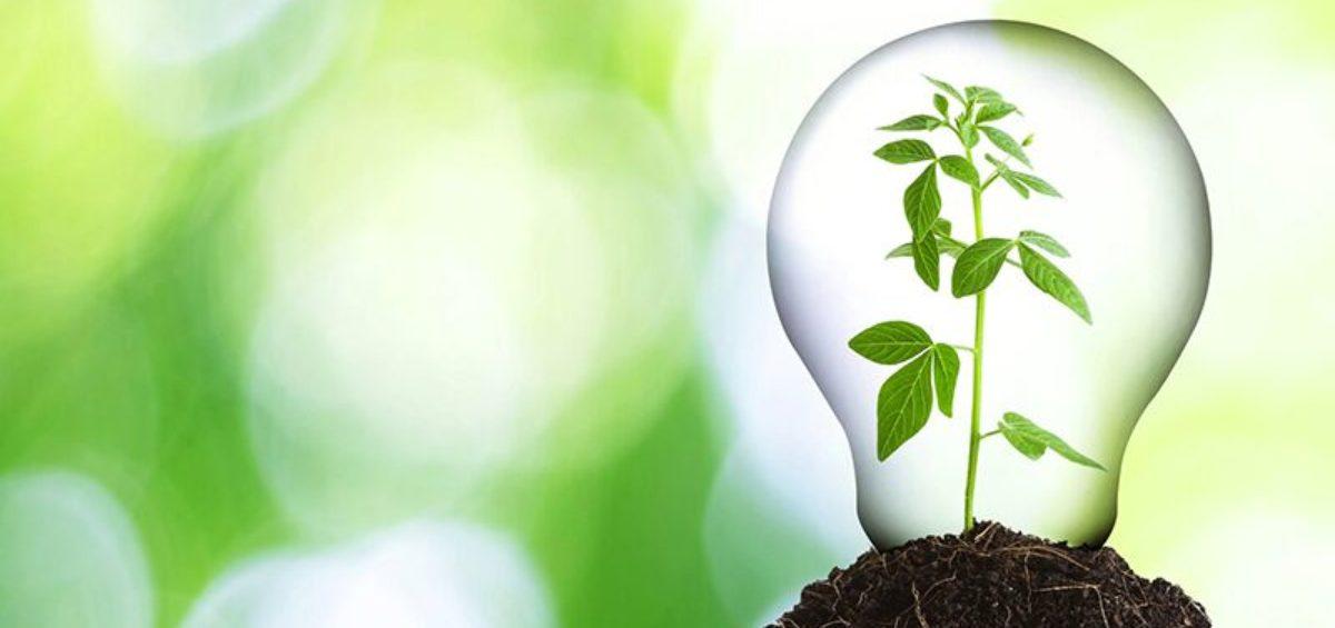 eco-friendly-1200x565